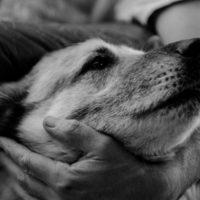 Prescribing Animals for Human Health: Above all, do no harm