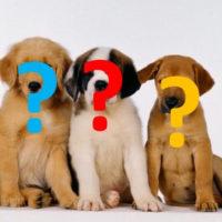 Episode 439 - The Dog Selection Dilemma