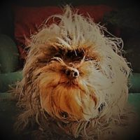 Catastrophizing Companion Animal Behavior