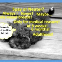 Spay and Neuter History and Mystery