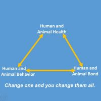 Episode 491 - Behavioral Seizures in Dogs and Cats
