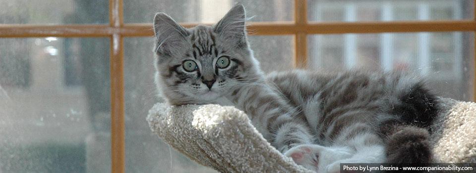 slide-1-cat1