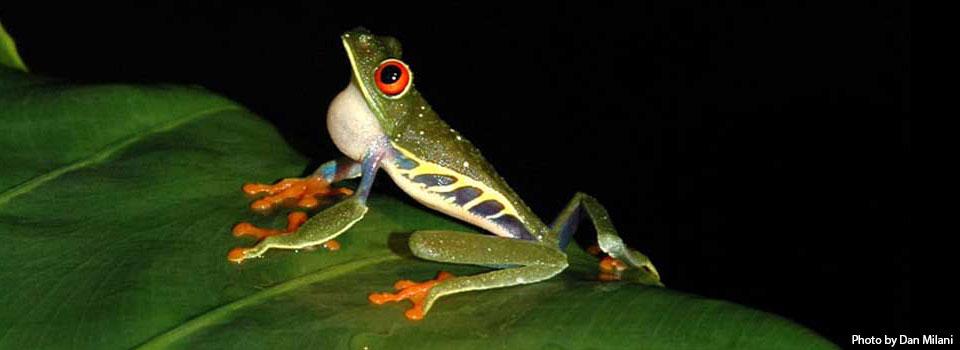 slide-3-frog1