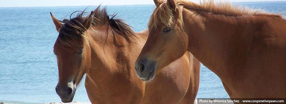 slide-4-horses1